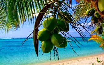 coconut tree_beach